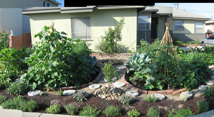 Edible Estates Lakewood Garden