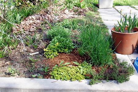 herb garden april