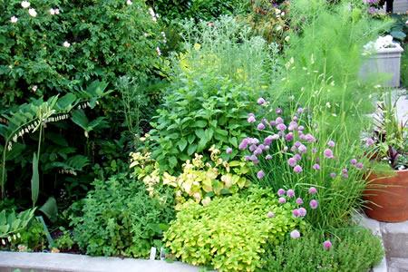 herb garden june 1, 2009
