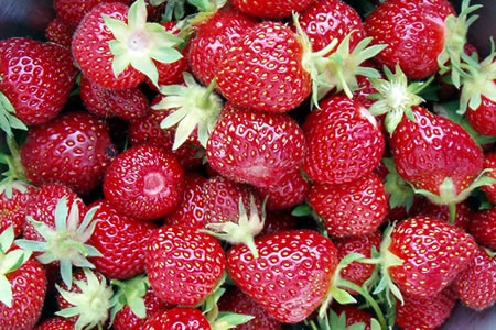 bumper crop of strawberries