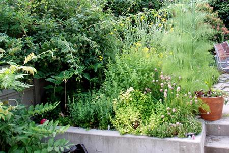 herb garden june 22