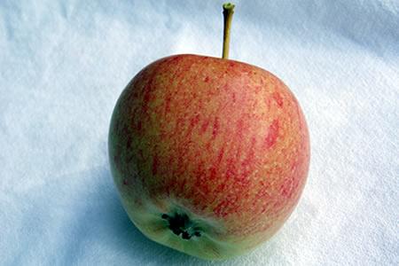 i grew apples
